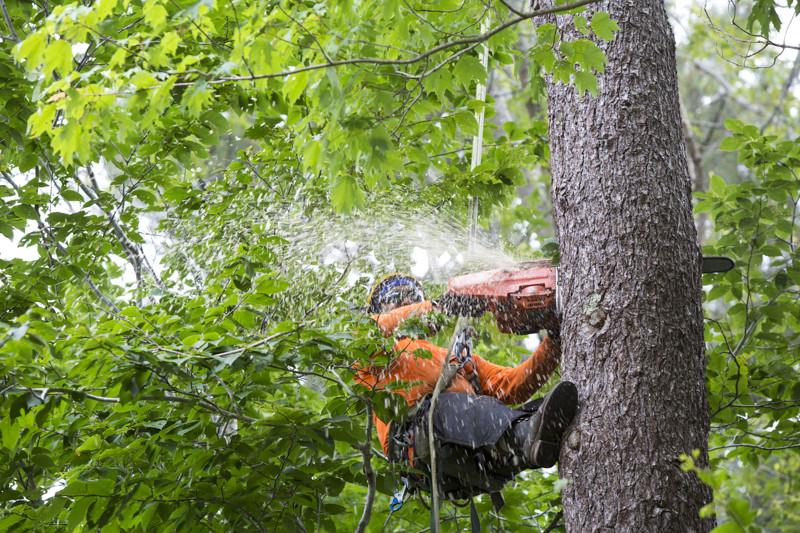 Tree Trimming Longmont